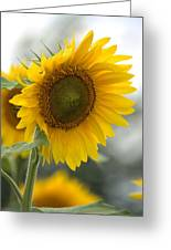Sunflower Portrait Greeting Card