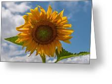 Sunflower Power Greeting Card