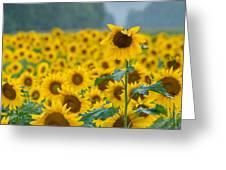 Sunflower Rain Sussex Nj Greeting Card