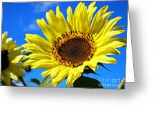 Sunflower Reaching For The Sun Greeting Card