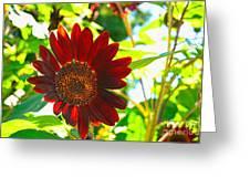 Sunflower - Red Blazer - Luther Fine  Art Greeting Card
