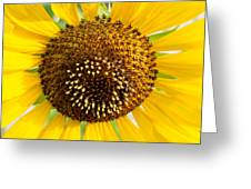 Sunflower Reproductive Center Greeting Card