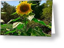 Sunflower Sally Greeting Card