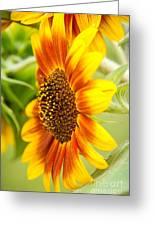 Sunflower Side Portrait Greeting Card