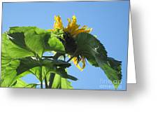 Sunflower Sky Greeting Card