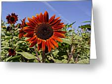 Sunflower Sky Greeting Card by Kerri Mortenson