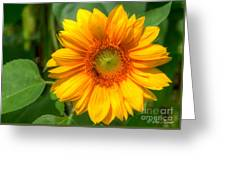 Sunflower Smile Greeting Card