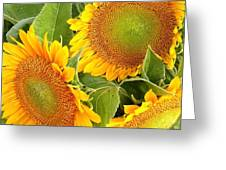 Sunflower Smiles Greeting Card