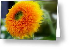 Sunflower Soft Greeting Card