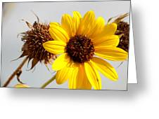 Sunflower Stages Greeting Card