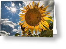 Sunflower Study 2 Greeting Card