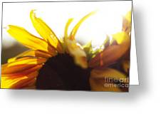 Sunflower Sunlight Greeting Card