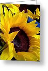 Sunflower Sunny Yellow In New Orleans Louisiana Greeting Card