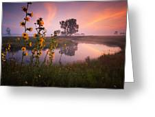 Sunflower Sunrise Greeting Card