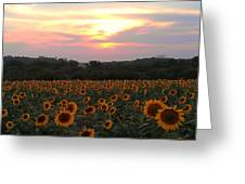 Sunflower Sunset Greeting Card by Dawn Vagts