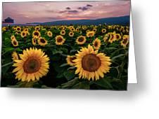 Sunflower Sunset II Greeting Card