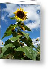 Sunflower Tall Beauty Greeting Card