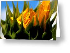 Sunflower Teardrop Greeting Card