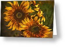 Sunflower Trio Greeting Card