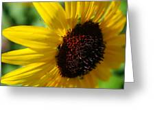 Sunflower Two Greeting Card