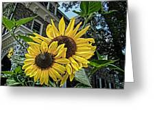 Sunflower Under The Gables Greeting Card