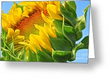 Sunflower Unfolding  Greeting Card