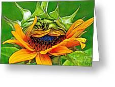 Sunflower Volunteer Half Bloom Greeting Card