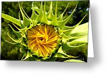 Sunflower Whirl Greeting Card