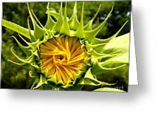 Sunflower Whirl Greeting Card