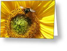 Sunflower With Bee Greeting Card