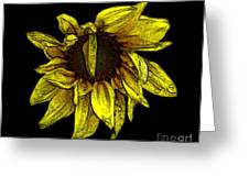 Sunflower With Contours Effect Greeting Card