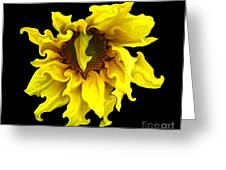 Sunflower With Curlicues Effect Greeting Card