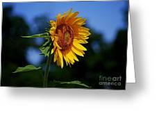 Sunflower With Honeybee Greeting Card