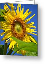 Sunflower With Honeybee Greeting Card