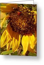 Sunflower With Ladybug Greeting Card