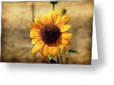 Sunflower With Texture Greeting Card