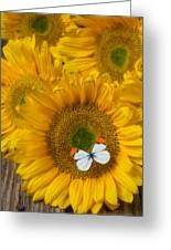 Sunflower With White Butterfly Greeting Card