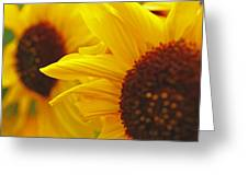 Sunflower Yellow Greeting Card