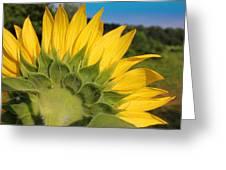 Sunflower1253 Greeting Card