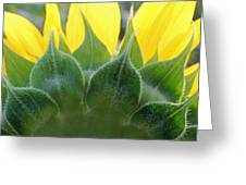 Sunflower1261 Square Greeting Card