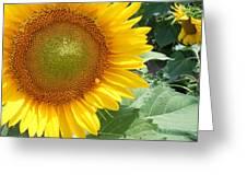 Sunflowers #2 Greeting Card