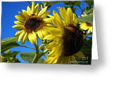 Sunflowers Abound Greeting Card