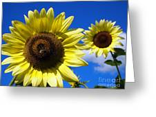 Sunflowers Against A Blue Sky Greeting Card