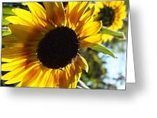 Sunflowers Alive And Free Greeting Card
