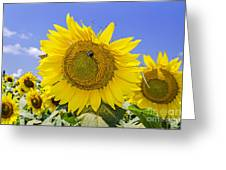 Sunflowers And Blue Sky Greeting Card
