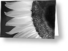 Sunflowers Beauty Black And White Greeting Card