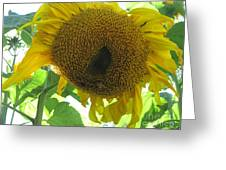 Sunflowers Bee Alaska Greeting Card by Elizabeth Stedman