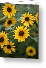 Sunflowers Bloom Greeting Card
