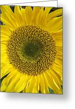 Sunflower's Cluster Greeting Card