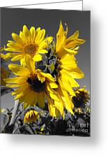 Yellow Selected Sunflowers Greeting Card